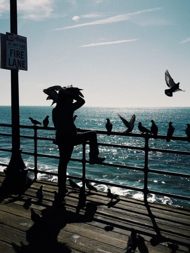 A birdman captured at Santa Monica beach, Los Angeles